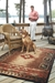 Capel Badin 2366 Coffee Multi Area Rug - 168523